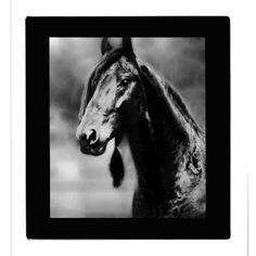 Apache horse 3 ring binder