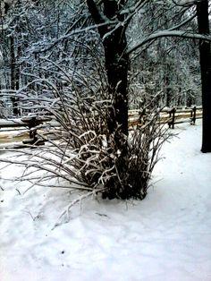 Śnieg! Dzięki niemu widok za oknem nareszcie nastraja pozytywnie :-)