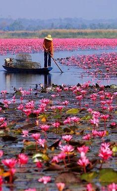 La nature rose (13)                                                                                                                                                                                 Plus