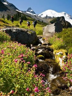 Photo: Hiker on the Wonderland Trail to Summerland in Mount Rainier National Park Washington