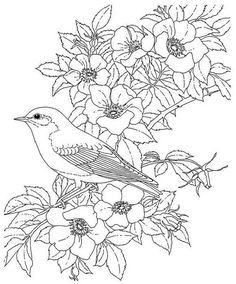 Eastern Bluebird And Rose New York State Bird Flower Coloring Page From Category Select 20890 Printable Crafts Of Cartoons Nature