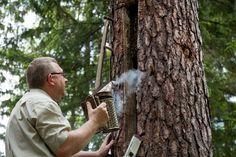 Bedrohte Insekten: Wie Polen und Baschkiren die Biene retten wollen - SPIEGEL ONLINE - Wissenschaft