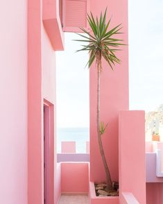 Throwback to this amazing view. La Muralla Roja is such a perfect place. #ihavethisthingwithpink #plantsonpink #lamurallaroja #murallaroja #colorcrush #dscolor #abmtravelbug #ricardobofill #dscolor #flashesofdelight #architecturephotography #architecture #spain #alicante #calpe #ihavethisthingwithcolor #popsofcolor #mytinyatlas