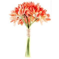 HobbyLobbyDisplay this charming Coral Gerbera Daisy Bundle   Bundle contains 8 stems.