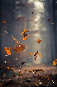 An action nature shot capturing autumn. The dead leaves fall to the ground with delicate sunlight in the background. Autumn Inspiration, Spiritual Inspiration, Fall Season, Belle Photo, Fall Halloween, Batman Halloween, Nature Photography, Children Photography, In This Moment