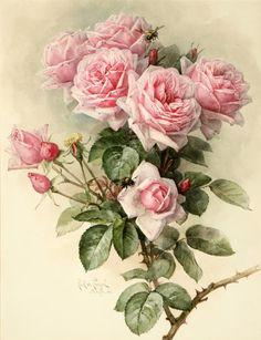 Shabby Chic Pink Victorian Roses Tile - May 04 2019 at Art Floral, Floral Prints, Rose Prints, Botanical Illustration, Botanical Prints, Vintage Flowers, Vintage Floral, Rosa Shabby Chic, Vintage Rosen