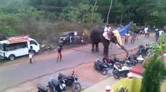 Why You Never Want To Piss Off An Elephant
