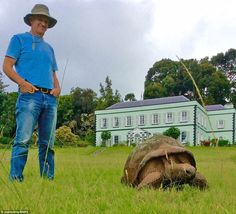 A transformation: Jonathan has surpassed the average life expectancy of 150 years for the giant tortoise - and he's still going strong