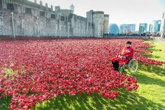A World War 1 Veteran sits among the thousands of ceramic poppies created in the moat of the Tower of London!