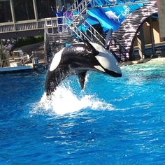 The great Shamu!