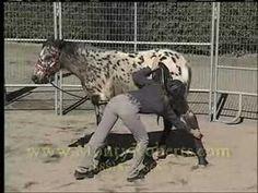 Monty Roberts Gentling Your Spooky Horse