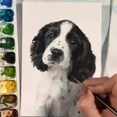 This speed video shows my process painting this puppy pet portrait. Art Drawings Sketches, Animal Drawings, Springer Spaniel Puppies, Cocker Spaniel, Animal Paintings, Watercolor Paintings Of Animals, Art Sketchbook, Watercolor Art, Animal Watercolour