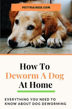 If your dog has worms it could be losing nutrients. Learn everything you need to know about how to deworm a dog at home quickly and easily. Funny Dog Memes, Funny Dogs, Cute Dogs, Adorable Puppies, Funny Animals, Dog Health Tips, Dog Health Care, Dog Safe Medicine