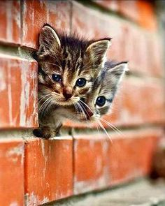 Kittens are sooooooo cute!!!!!
