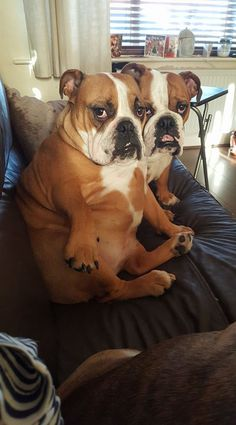 Double Trouble ~ Double Love! Posted on Facebook by Sammie Russell on Baggy Bulldogs