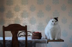 Cookie cat by lindayuen, via Flickr