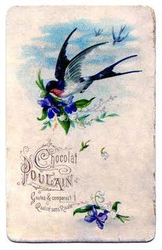 vintage swallow