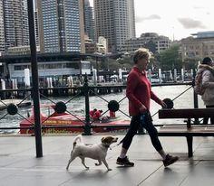 10 Pet Friendly Planning Ideas Pet Friendly Pets Disaster Response