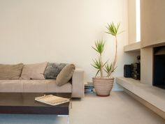 Plantas para el interior de tu casa: Plantas para interiores