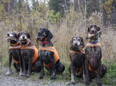 Nancy Anisfield sent us this picture from Maine. There were 14 shorthairs in camp and these 5 are all related.