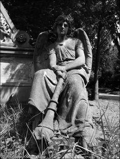 Deep relaxed angel, enjoying the sun