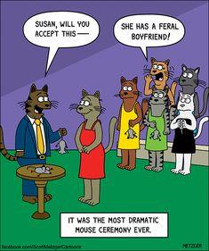 Cats Bus #CatsWallpaper