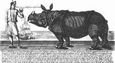 Krakow 1745-Clara the Dutch rhino