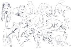 wolf   Tumblr