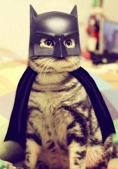 Bat kitty