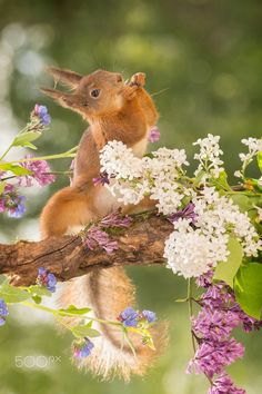 flower squirrel  Animals photo by geertweggen http://rarme.com/?F9gZi