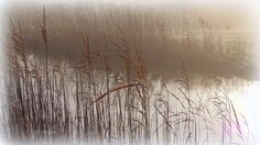 #fotografie #landschap #natuur #mist #riet #water #Bolsward #Friesland