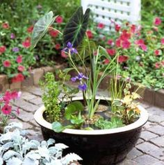 Does the idea of digging a hole in your yard for a big water garden seem daunting? You'll appreciate the water-garden rewards of our easy-care container.  Choose a container that's at least 6 inches deep, with a dark interior and no drainage hole, or a half barrel with a plastic liner. A glazed terra-cotta pot can also be used.
