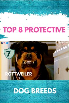 Best 8 Protecting Dog Breeds of the World. Best Guard Dog Breeds, Top Dog Breeds, Best Guard Dogs, Large Dog Breeds, Rottweiler Dog Breed, Rottweiler Names, Protective Dog Breeds, Famous Dogs, Dog Varieties