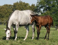 Bone Growth in Young Horses: The Importance of Vitamin K