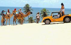 Diversos passeios tur�sticos, dentro e fora do Brasil, oferecem intera��o com animais. No Rio Grande do Norte, a sensa��o � o passeio de dromed�rio, que percorre as dunas e permite que os turistas explorem a regi�o de um jeito diferente. <a href=http://vidaeestilo.terra.com.br/turismo/interna/0,,OI5114865-EI14045,00-Conheca+destinos+turisticos+que+promovem+interacao+com+animais.html>Leia mais</a>  Foto: Setur/Emprotur/Divulga��o