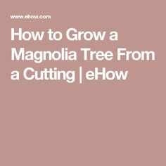 How to Grow a Magnolia Tree From a Cutting | eHow