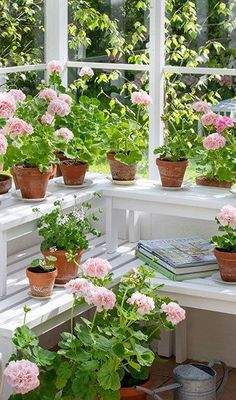 Greenhouse Apartments, Greenhouse Shed, Green Garden, Summer Garden, Home And Garden, Succulents Garden, Planting Flowers, Pink Geranium, Vintage Gardening