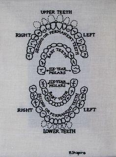 A Child's Diagram of Teeth | Flickr - Photo Sharing!