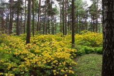 Rodoparatiisi Helsingissä Parks, Flora, Gardens, Outdoor Gardens, Plants, Garden, House Gardens, Parkas