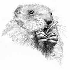 """The Outside Story: """"Appreciating Woodchucks,"""" by Susan Shea. Illustration by Adelaide Tyrol. """"One summer we had an ongoing battle with a woodchuck. Unbeknownst to us, it had dug a burrow in an ideal location — in the center of our dense raspberry patch, about 10 feet from our vegetable garden…"""""""
