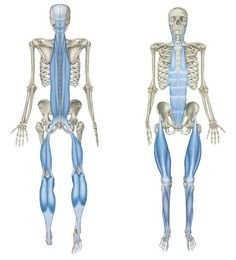 Don't neglect the Feet- they are the foundation for the rest of the body structure. #Prehab - Use a golf,tennis or spikey ball under your bare foot & slowly roll it backwards, forwards & in small circular movements to help release the fascia.#feet #anatomy #fascia #prehab #balance