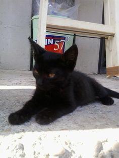 #lovemycat #mili #blackcat #little