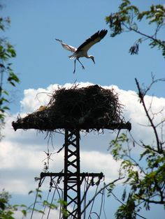 Avian Architecture – the Precarious Nests of the Stork | The Ark In Space