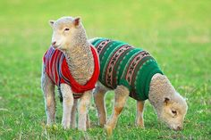 I ♥ their sweaters!