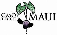 Maui Could Be Next Hawaiian Island to Ban GMOs