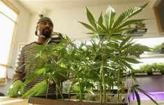 State Oversight may tame California Pot Shops