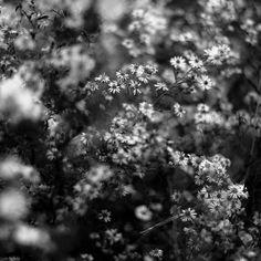 https://flic.kr/p/Jv8pTT   Summer Wildflowers 019   dream-a-go-round