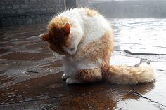 rainy day #cat