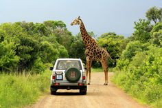 Going on a safari in Africa Oh The Places You'll Go, Places To Visit, Giraffe Photos, The Lion Sleeps Tonight, Alpaca My Bags, Destinations, Safari Adventure, Out Of Africa, I Want To Travel