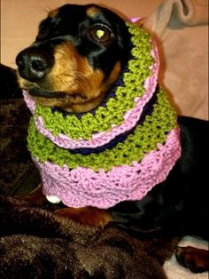 Crochet snood for your dachshund. Made by Buttercup Crochet Designs